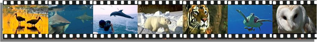 new film strip